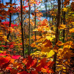 DAE Offers Vibrant Fall Getaways To British Columbia