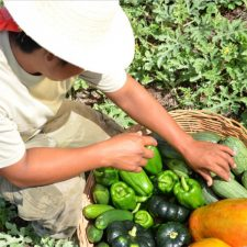 Ethos Farm in the Jungle – Promoting Sustainable Tourism Practices
